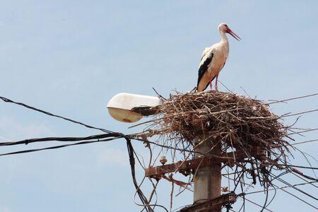 White stork nest on a light pole in Romania
