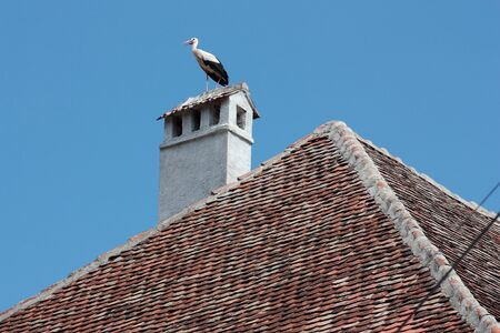 White stork standing on a chimney in Romania
