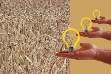 Wheat a renewable energy source