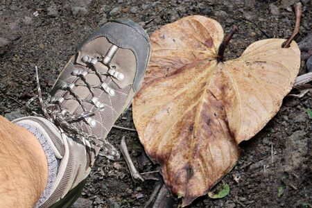 Heart shaped brown leaf on the ground while is crushed by a boot Stock fotó