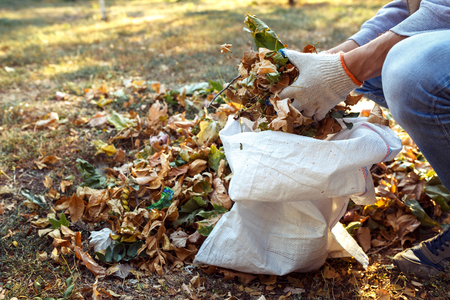 young boy collects fallen leaves in autumn otdoor