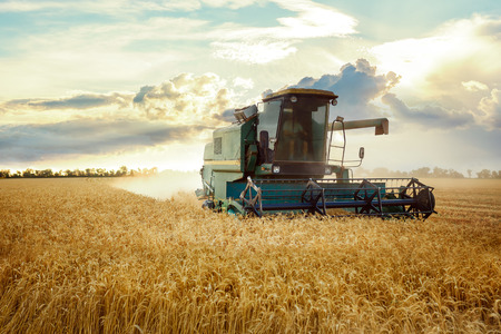 combine harvester working on a wheat field. On the Sunset Banco de Imagens