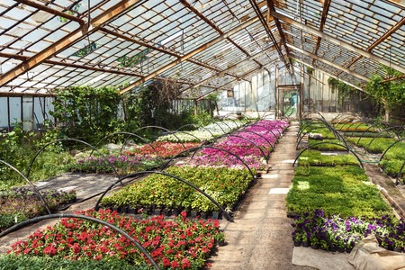 Flowers and grass in greenhouse in spring