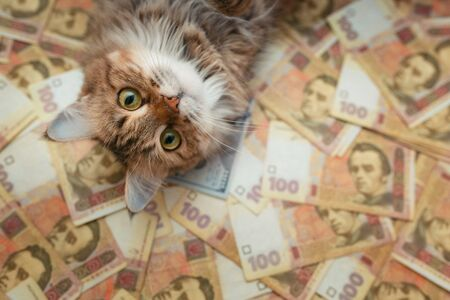 The face of the cat that lies on the Ukrainian banknotes. The cat lies on the hryvnia 写真素材 - 142147715