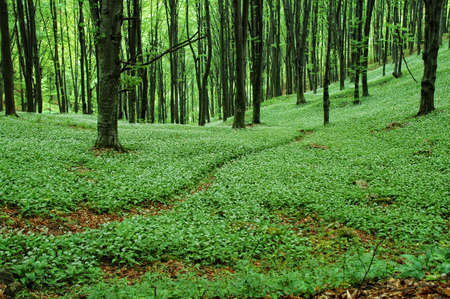 Pathway in green forest Stock Photo - 8306155