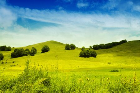 Landscape with green grass and blue sky  photo