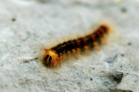 Caterpillar on a stone Stock Photo - 8265787