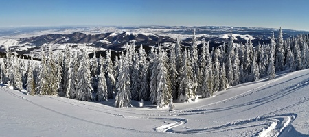 Trees covered with hoarfrost and snow in mountains - panorama photo