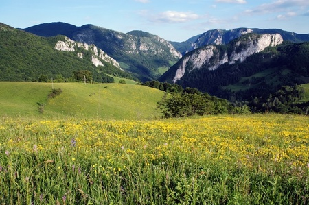 Spring landscape with yellow flowers on a meadow photo