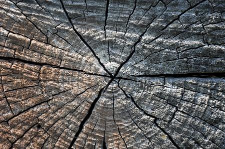 Trockenes Holz Holz natürlichen Hintergrund