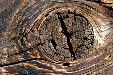 Old wooden background with knot photo