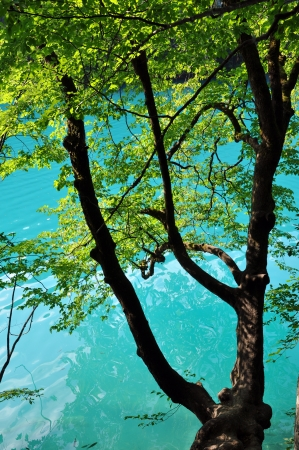 Beautiful turquoise lake in Plitvice National Park, Croatia photo