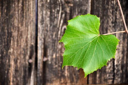 Wooden background with grape leaf photo