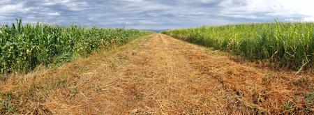 Arable field panorama Stock Photo - 15440604