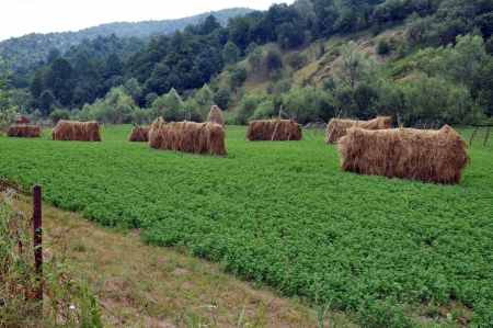 Countryside haystacks Stock Photo - 16479111
