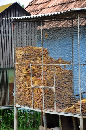 Corn storage in a silo, ideal for background Stock Photo - 17127162
