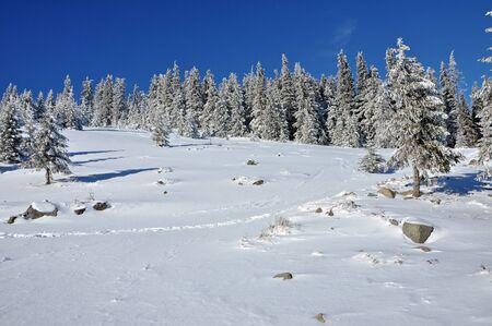Winter in the mountains. Vladeasa mountains, Transylvania, Romania Stock Photo - 17295079