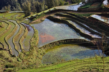Paddy terraces in Sapa, Vietnam  photo