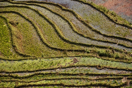 Terraced rice fields in Sapa, Vietnam  photo
