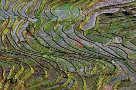 Rizi�res en terrasses � Sapa, Vietnam photo