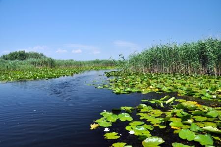 danube delta: Swamp vegetation in the Danube Delta