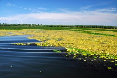 danubian: Swamp vegetation in the Danube Delta