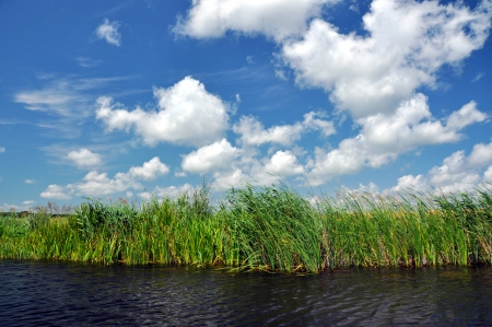 Swamp vegetation in the Danube Delta photo