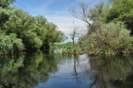 danubian: Flooded forest in the Danube delta