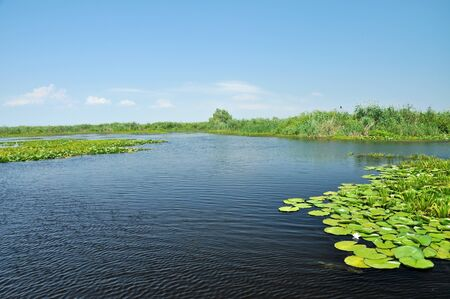 danubian: Water channel in the Danube delta with swamp vegetation and flooded forest  Stock Photo
