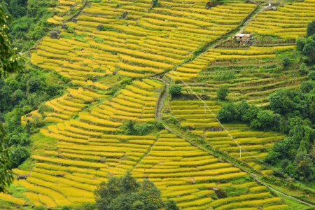 Spectacular rice fields in Nepal photo