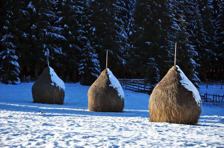 snowlandscape: Snow covered haystacks at winter Stock Photo