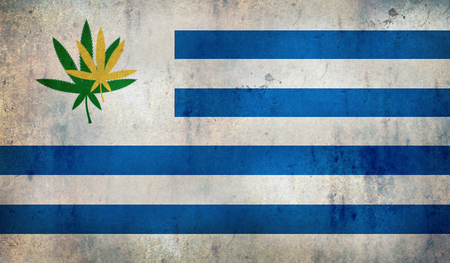 legalize: Grunge flag of Uruguay with a cannabis leaf  Uruguay becomes first country to legalize marijuana trade