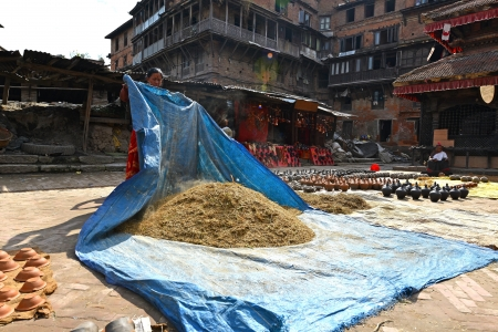 to thrash: BHAKTAPUR, NEPAL - OCTOBER 10  Unidentified woman threshing grain in traditional way in the Pottery square of Bhaktapur  The city is part of UNESCO heritage  On October 10, 2013 in Kathmandu, Nepal