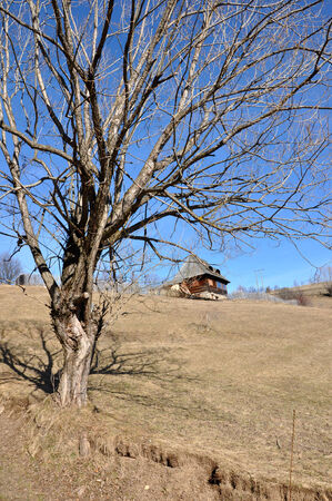 paucity: Hut in the mountains with a dry tree in the foreground