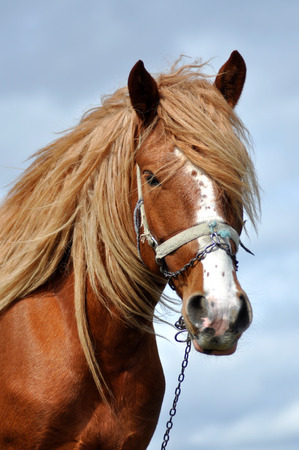 Portrait of a beautiful horse with blonde mane photo