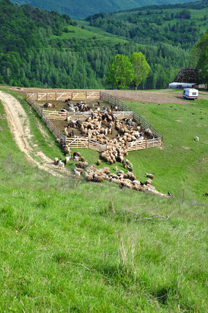 Sheepfold in the mountains photo