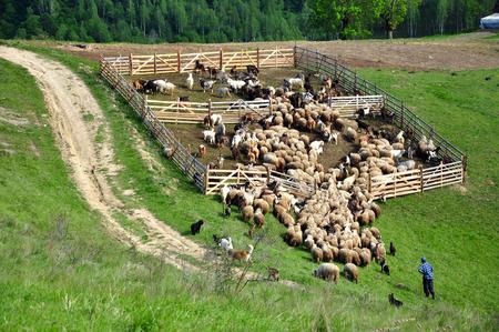 sheepfold: Sheepfold in the mountains