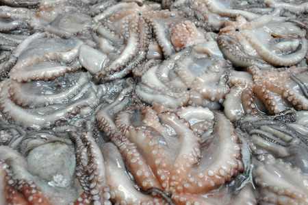 Background with fresh squid in fish market photo