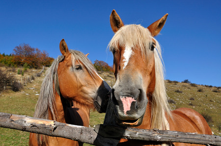 Two horses photo