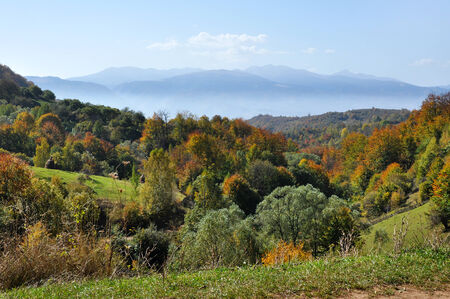 treeline: Colorful autumn forest mountain landscape