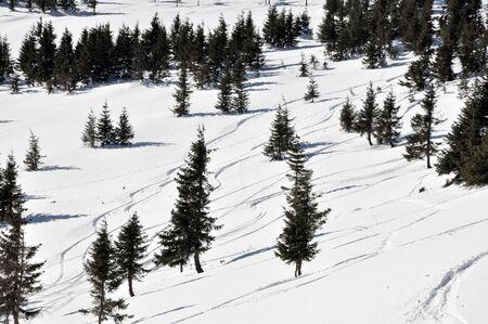 powder snow: Ski tracks in the fresh powder snow and fir trees Stock Photo