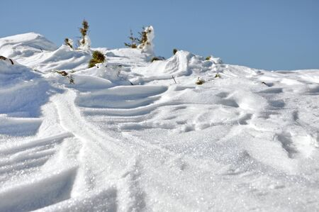 Snow covered junipers at winter photo