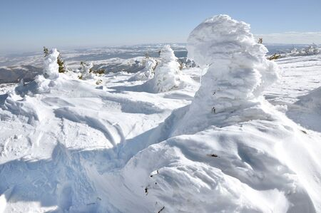 Snow and ice covered trees by wind in the mountains photo