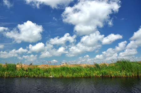 danubian: Waterline in the Danube delta, Romania Stock Photo