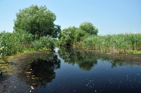 danubian: Danube delta Stock Photo