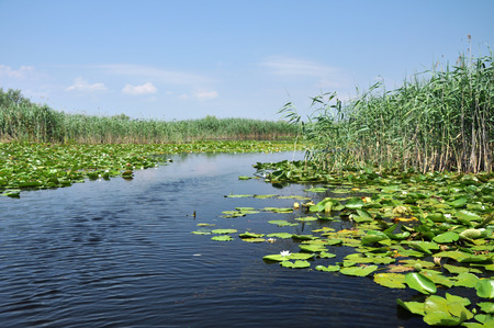 danubian: Lake with water lilies in the Danube delta, Romania