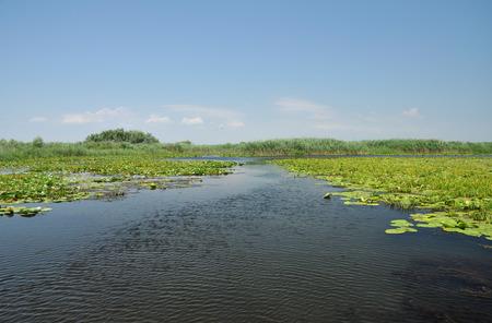 danube delta: Lake with water lilies in the Danube delta, Romania