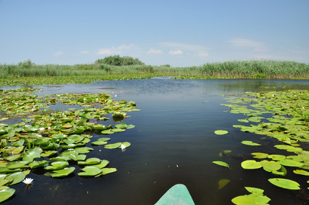 Exploring Danube delta with a boat photo