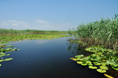 danubian: Water channel in the Danube delta with swamp vegetation Stock Photo