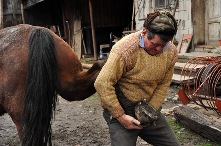smithery: LUPENI  APRIL 19: Unidentified blacksmith farrier shoeing a horse. Such type of smithery techniques are very rare in Romania. On April 19 2012 in Lupeni Romania